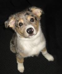 Colborne Street Pet Hospital clientnew puppy client