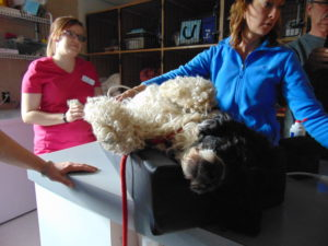 Patches is relaxed and comfortable during her ultrasound,